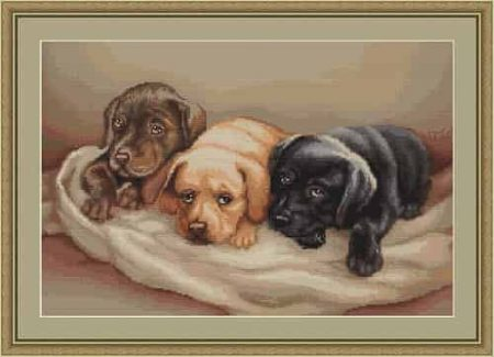 Luca s Cross Stitch Kit - Three Dogs,  Labradors B434