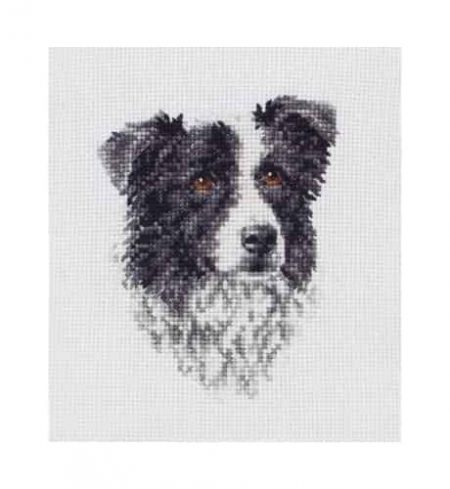 Anchor Cross Stitch Kit - Border Collie PCE219