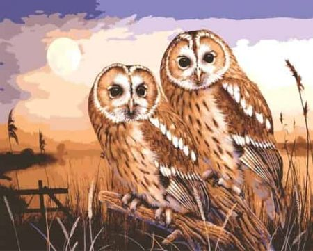 Grafitec Printed Tapestry Needlepoint Canvas - Owls by Moonlight